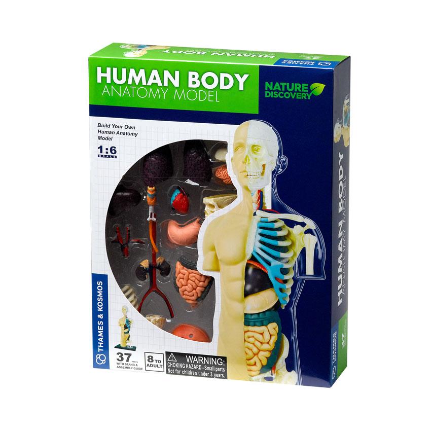 Anatomijos rinkinys THAMES & KOSMOS Žmogus vaikams nuo 8 m. (260830)