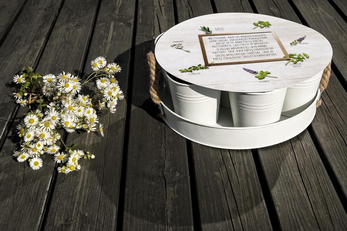Arbatžolių auginimo rinkinys DARŽAS baltos spalvos, 1 vnt.
